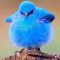 Birdee10